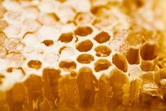 Honingraat die met honing wordt gevuld Royalty-vrije Stock Afbeeldingen