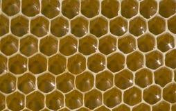 Honingraat - een unieke verwezenlijking van honingbijen Royalty-vrije Stock Foto