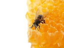 Honingraat en bij op witte achtergrond Geacclimatiseerd insect royalty-vrije stock afbeelding