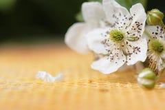 Honingraat en kersen de gele abstracte achtergrond van de bloemclose-up royalty-vrije stock foto
