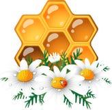 Honingraat en madeliefje stock illustratie