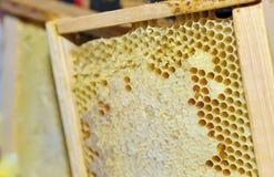 Honingraat in het houten frame Stock Foto's