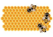 Honingraat met Bijen Stock Foto's