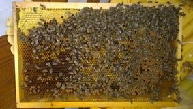 Honingraat met bijen Royalty-vrije Stock Fotografie