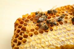Honingraat met bijen op lichte achtergrond Royalty-vrije Stock Afbeelding