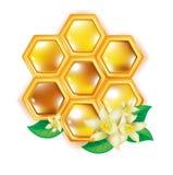 Honingraat met bloemen Royalty-vrije Stock Afbeeldingen