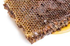 Honingraat met honing Royalty-vrije Stock Fotografie