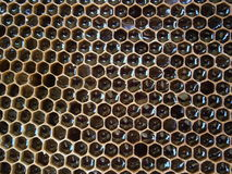 Honingraat met honing Stock Foto