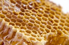 Honingraat met honing op witte achtergrond Stock Afbeelding