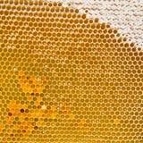Honingraat met vers honing en stuifmeel Stock Afbeelding