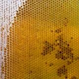 Honingraat met vers honing en stuifmeel Stock Foto