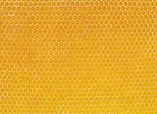 Honingraat met verse honing stock afbeelding