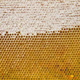 Honingraat met verse honing Royalty-vrije Stock Afbeelding