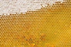 Honingraat met verse honing Royalty-vrije Stock Afbeeldingen