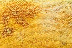 Honingraat natuurlijke achtergrond royalty-vrije stock fotografie