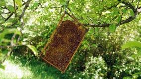 Honingraat op de boom in de tuin Royalty-vrije Stock Foto's