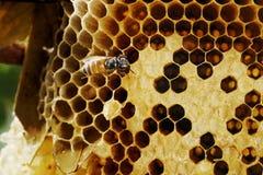 Honingraat op hout Royalty-vrije Stock Fotografie