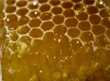 Honingraat waarvan de honing stroomt stock fotografie