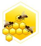 Honingraten met bijen Royalty-vrije Illustratie