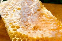 Honingraten met honing Royalty-vrije Stock Foto's