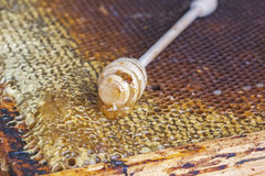 Honingraten met honing en houten honingsdipper Stock Foto
