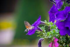 Honingsonderzoek royalty-vrije stock fotografie