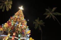Honolulu Hale Christmas tree. Christmas tree at Honolulu Hale, Oahu Hawaii Stock Image