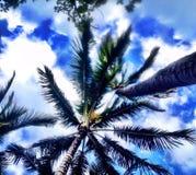 Honolulu, Hawaii Imágenes de archivo libres de regalías