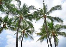 Honolulu. Sunny day to Honolulu, Hawaii Royalty Free Stock Photography