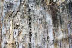 Honor de la madera Fotografía de archivo libre de regalías