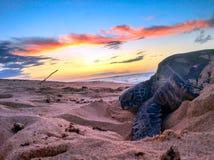 Honu die van een zonsondergang Noord- van Oahu genieten Royalty-vrije Stock Afbeelding