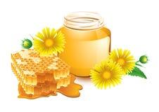 honung royaltyfri bild