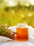 Honung i en glass krus med melliferous örter för blommor Royaltyfria Bilder