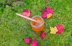 Honung i en glass krus med melliferous örter för blommor på träyttersida Royaltyfri Bild