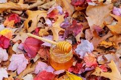 Honung i en glass krus med melliferous örter för blommor på träyttersida Arkivfoton
