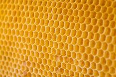 Honung i honungskaka Royaltyfri Bild