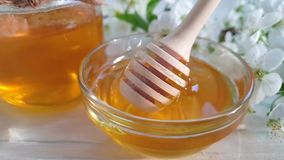 Honung körsbärsröda blomningar på träbakgrundsvåren arkivfilmer