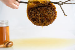 Honung med honungskakan Royaltyfri Foto