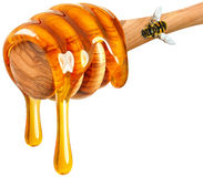Honung och bi Arkivbild