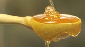 Honung på en träsked stock video