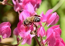 Honungbi på blomma Arkivfoto