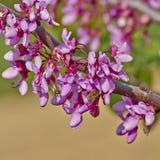 Honungbi som pollinerar lösa blommor Arkivfoton