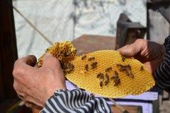 Honungbiarbetare på honungskakan Arkivbilder