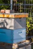 Honungbin att gå och lämna bikupan tillbaka royaltyfri foto