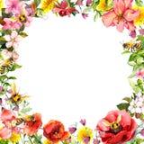 Honungbin i lösa blommor, fältörter Blom- kort, ram vattenfärg royaltyfri illustrationer