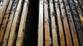 Honungbin på den hem- bikupan arkivfilmer
