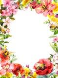 Honungbin, sommar blommar, lösa gräs, fältörter Blom- kort, ram vattenfärg stock illustrationer