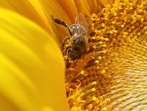 Honungproduktion Royaltyfri Bild