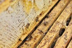 Honungram med bin i bikupa royaltyfri bild