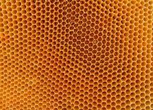 Honungsbihårkambakgrund Arkivfoto